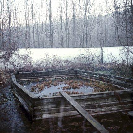 home-made swamp